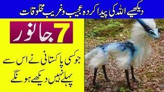 7 Animals You've Never Seen Before - Purisrar Dunya - Urdu Documentary