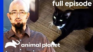 Feral Foster Cat Adjusts To Domestic Life | My Cat From Hell (Full Episode)