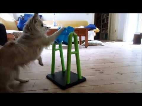 """Lilly testet das""""Trixie 32019 Dog Activity Turn Around"""" Produkttest, Hunde-Intelligenz-Spielzeug"""