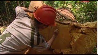Έγκλημα στον Αμαζόνιο | Crime in the Amazon