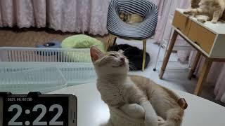 [고양이] 그리고 마늘까기 #19