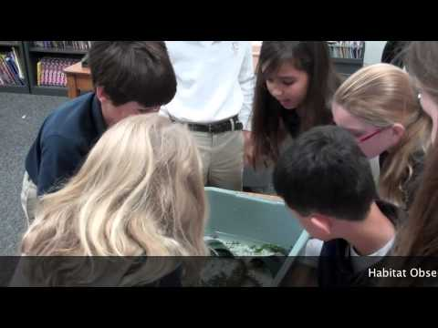 Crayfish Science