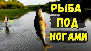 РЫБА ПОД НОГАМИ Семейная рыбалка на окуня 30
