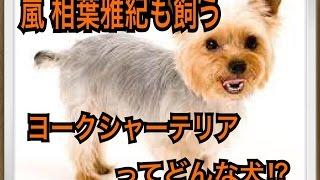 ペットで犬を飼おうと迷っている方へ〜ヨークシャーテリア〜 世の中には...