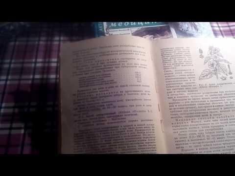 Корень алтея,описание и лечебное применение