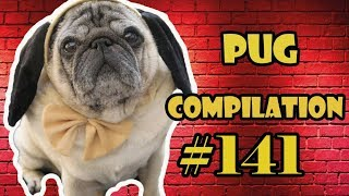 Pug Compilation 141  Funny Dogs but only Pug Videos | Instapug
