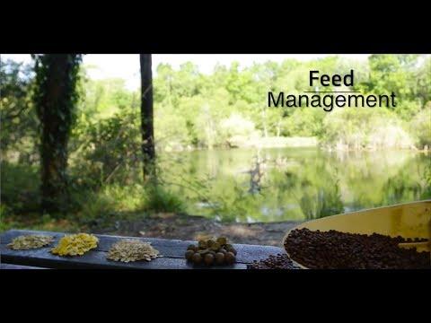 Fishery management - Feed management