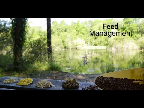 Fishery management - Feed management