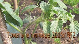 Томаты в теплице 2015г №2(В этом видео я рассказываю о состоянии моих томатов в теплице спустя неделю после посадки и высаженные..., 2015-05-15T17:03:02.000Z)