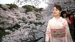 Токийцы заполонили парки и любуются цветующей сакурой (новости)