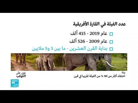 اختفاء أكثر من 90 % من الفيلة تقريبا في قرن!!  - نشر قبل 2 ساعة