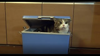 入るねこと、気になるねこ。-Maru gets into the cooler box and Hana misses him.-