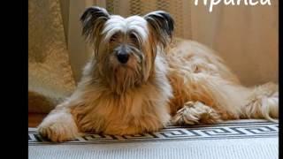 Собаки приюта Кожухово дома 2016