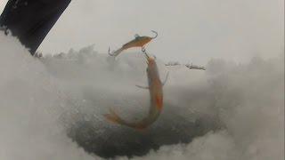 3 января 2015. Зимняя рыбалка. Окуни матросики на блесну и балансир + подводные съемки
