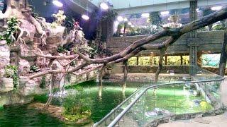 В Крокус Сити открылся океанариум - мы с детьми одни из первых его посетили