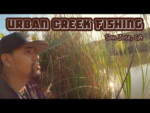 Urban Creek Carp Fishing In San Jose CA | ITGETSREEL 44