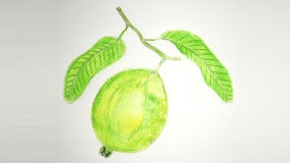 How to draw Pencil Coloring Guava step by step Easy Way