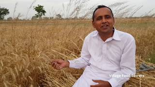 Kohlu Ka Tail | Mustard Oil Mill | Primitive Technology | Mubashir Saddique | Village Food Secrets