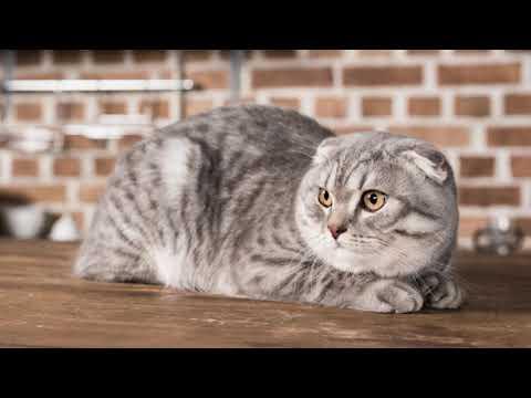 Вопрос: Как отучить кота мешать заснуть?