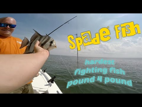 How To Catch Spade Fish (CBBT VA)