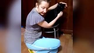 Как кошке дать лекарство в жидком виде