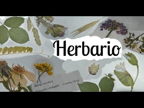 Como hacer herbario parte 2 I Pegar, etiquetar y presentar