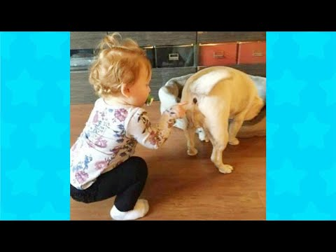 Dogs Have a Ruff Life Funny Fails | Try Not to Laugh Animals Funniest Dog Videos