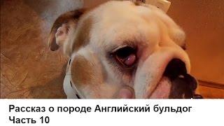 видео Аденома третьего века у собак – лечение и симптомы