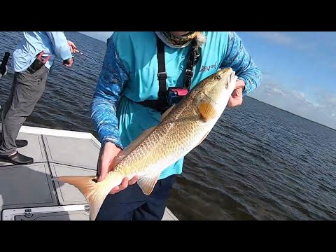 Inshore Flats Fishing For Redfish And Trout At Horseshoe Beach
