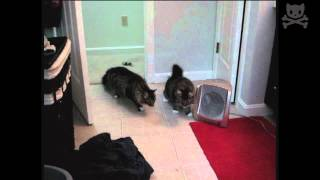 watch these cats get scared by their own shadows