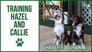 Training with CALLIE & HAZEL!