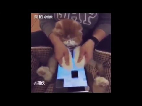 Cute Cat Playing Piano Tiles 2 - Little Star