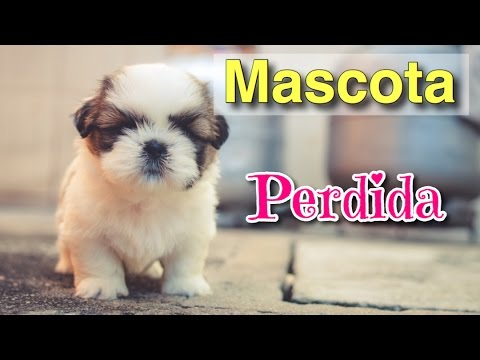 Wizapet App Para Búsqueda De Mascotas Perdidas