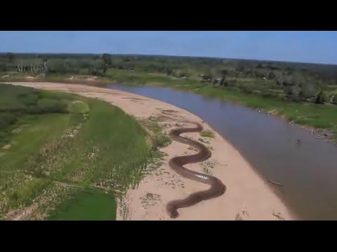 Giant Anaconda - World's longest snake found in Amazon River -  Joke Kh Post