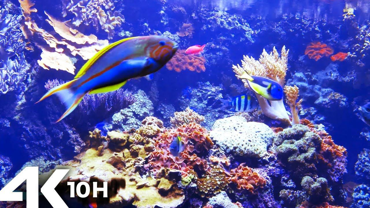 Download AQUARIUM 4k coral reef with water sound 10 Hours for Meditation Relaxation Sleeping #RELAXTIME