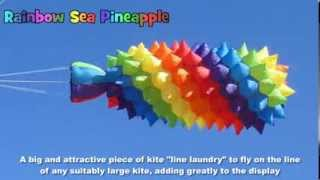 Rainbow Sea Pineapple kite line laundry
