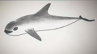 Vaquita porpoise nearing extinction