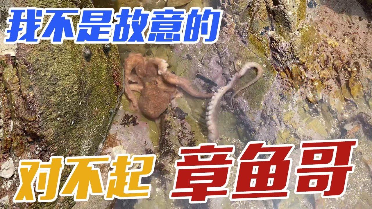 【English sub】章鱼哥的腿好脆弱,好残忍啊,对不起,章鱼哥,我真不是故意的!【赶海小章】