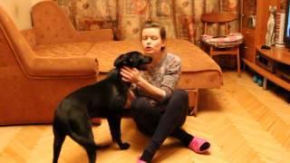 Прага - маленькая черная собака в дар