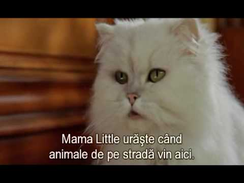 Snowbell Youtube