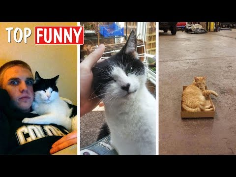 20 Of The Funniest I Don't Own A Cat Moments That Ever Happened To People