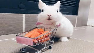 Funny and Cute Baby Bunny Rabbit Videos - Baby Animal Video Compilation #3 (2020)