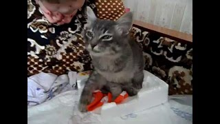 Котенок Барсик после отравления 2014 год Жесть 0