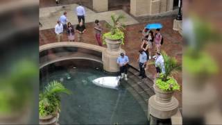 Security robot takes a spill into a Georgetown fountain