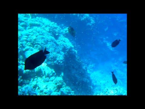 Seascope underwater trip (Red Sea, Egypt) - Подводное путешествие (Красное Море, Египет)