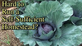 How Hard is it to Work Self Sufficient Homestead Growing Vegetables & Fruit?