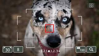Top 10 amazing facts about Catahoula Leopard Dog.