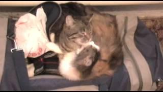 кошки,любовь