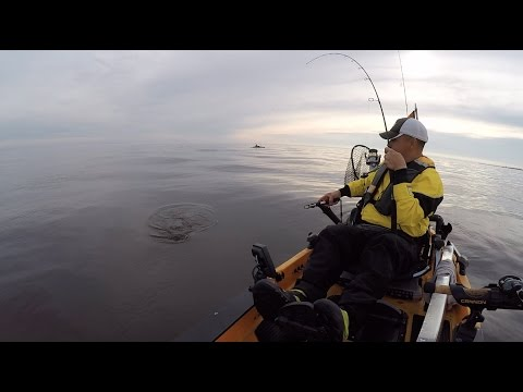 Striper Kayak Fishing Raritan Bay, New Jersey. Searching for a cow