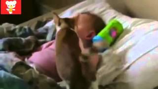 Дети и животные 2 ● Приколы с животными осень 2014 ● Dogs, Cats & Cute Babies Compilation ● Part 234(, 2015-02-05T13:05:37.000Z)